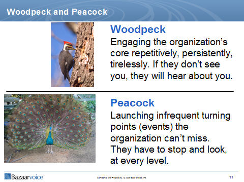 woodpeck and peacock