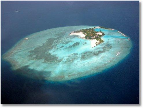 manta ray island maldives