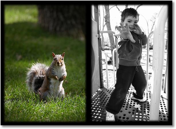 reporting squirrels analysis ninjas
